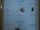 21_hmyz-bodavy