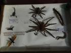 21_hmyz-jedovaty