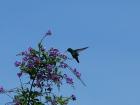 21_kolibrik-2