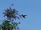 21_kolibrik-3