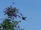 21_kolibrik-4