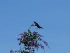 21_kolibrik-5