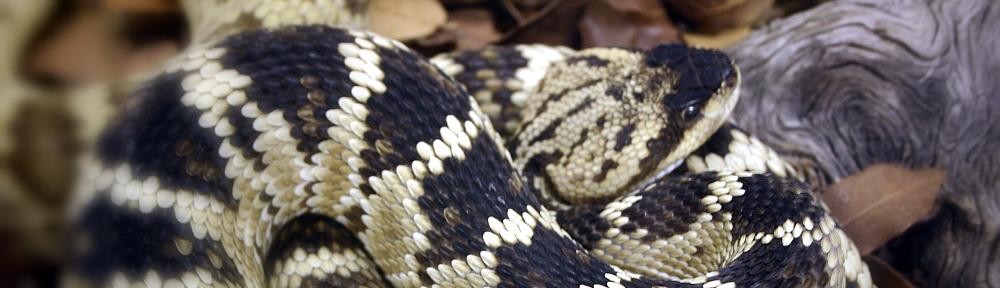 Spolek chovatelů jedovatých hadů